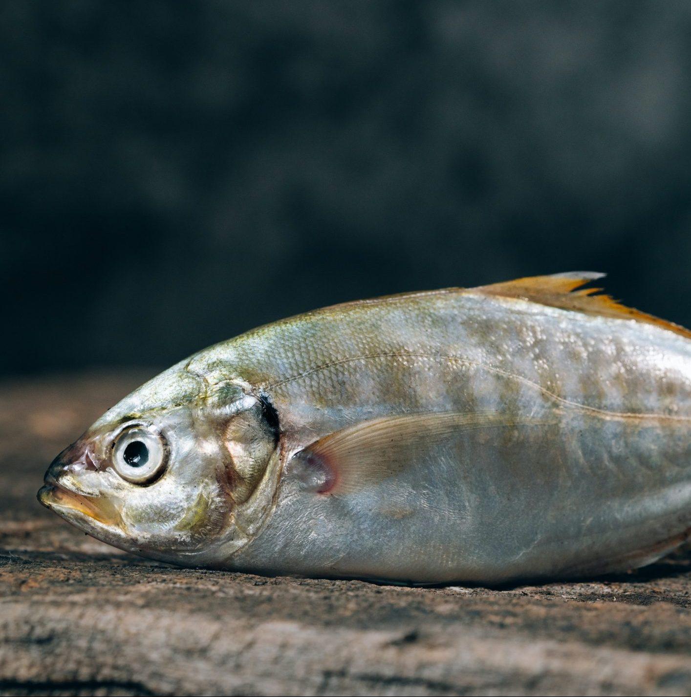 Kalaa väsymyskastikkeella lusikalla suoraan purkista ilman seksiä, kiitos