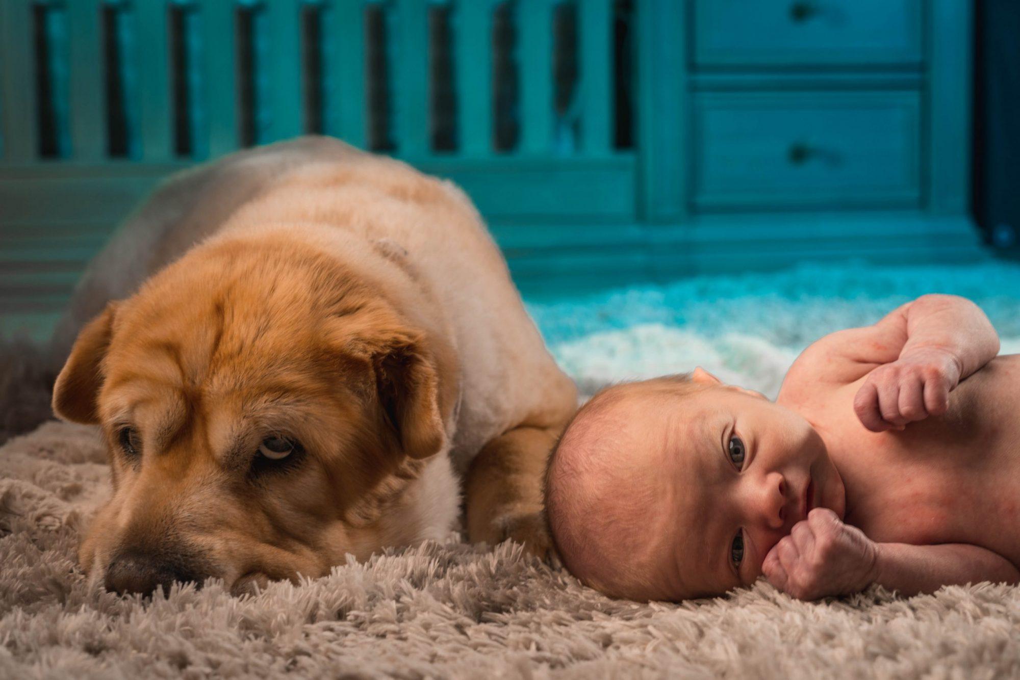 Vauva tulee taloon – pitäisikö vain luopua lemmikistä?