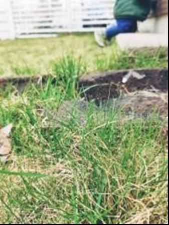 Mitä kaikkea ehtisinkään, jos en leikkaisi nurmikkoa?