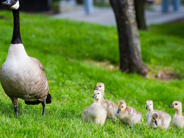 Tutkimus: Kolmen lapsen äidit ovat stressaantuneempia kuin muut