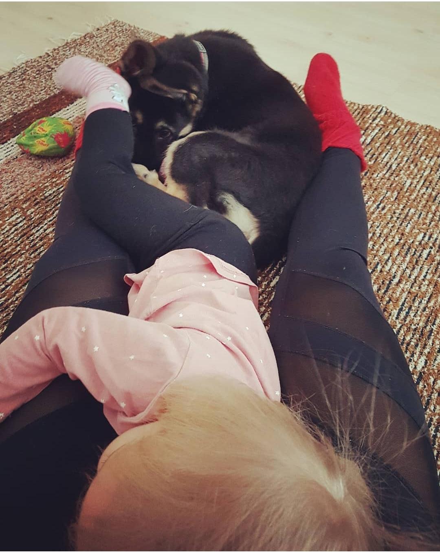 Tehtäisiinkö vauva vai otetaanko koiranpentu?