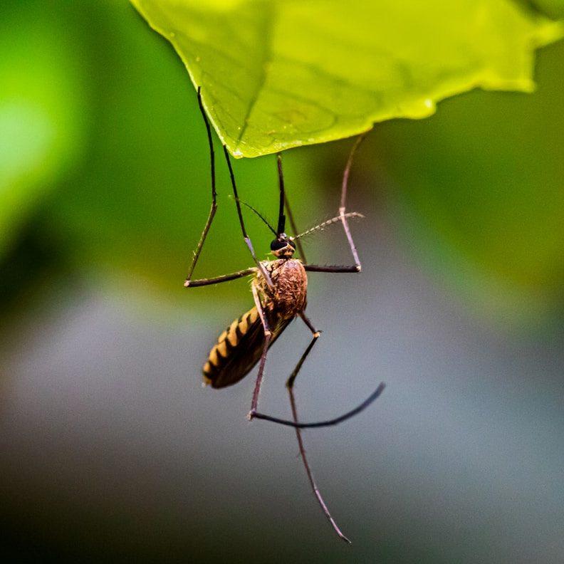 Hyvästit hyttysille: Nämä hyttyskarkoitteet sopivat koko perheelle