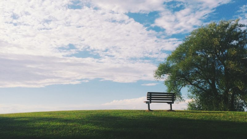 black wooden bench near green leaf trees under white clouds during daytime